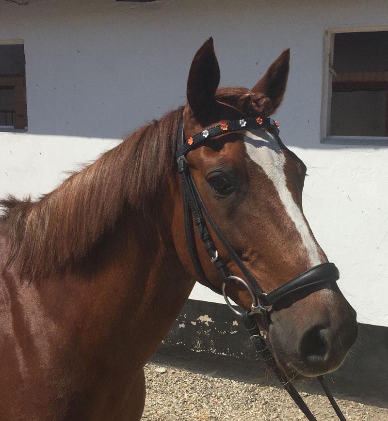 pandebaand_hest
